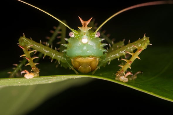Awesome Ears: The Weird World of Insect Hearing