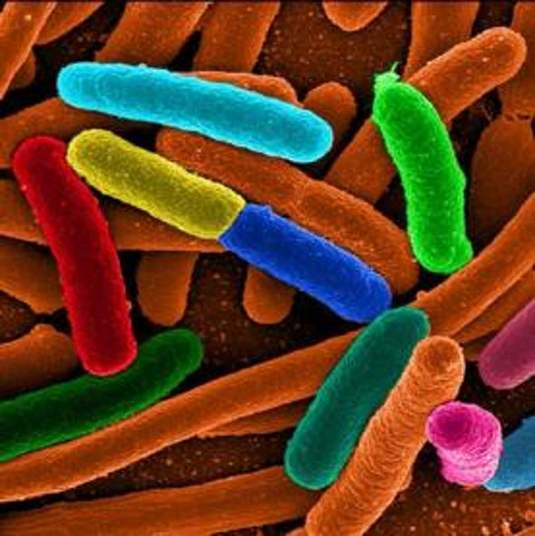 Microbial Mules: Engineering Bacteria to Transport Nanoparticles and Drugs