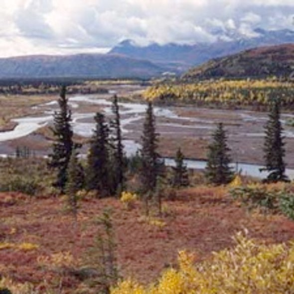 Forest Changes in Alaska Reveal Changing Climate