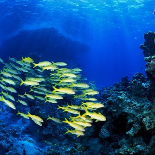 Slide Show: Glimpses of Undersea Life at Nation's New Marine Monuments
