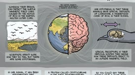 Why Some Animals Have a Head for Directions [Cartoon]