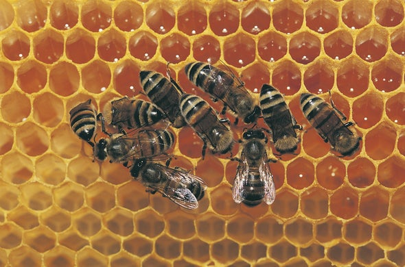 Even without Hands Honeybees Show Handedness