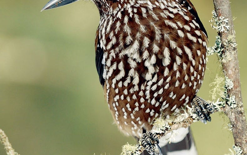 Clever Bird Uses Nature as Its Breadbox
