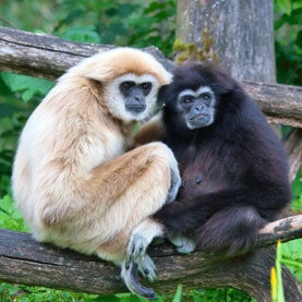 Love for Life? 12 Animals That Are (Mostly) Monogamous [Slide Show]