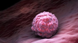 Hybrid Human–Chicken Embryos Illuminate Key Developmental Milestone