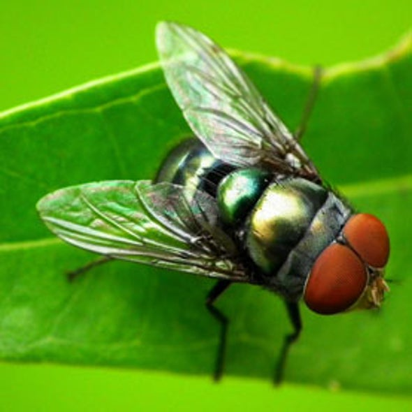 Flesh-Eating Flies Map Forest Biodiversity