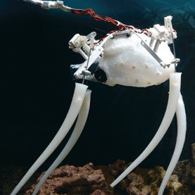 How to Build a Robot Octopus