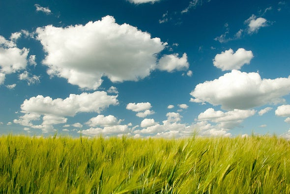 """New Source of Greenhouse Gas """"Cleaners"""" Found on Clouds"""