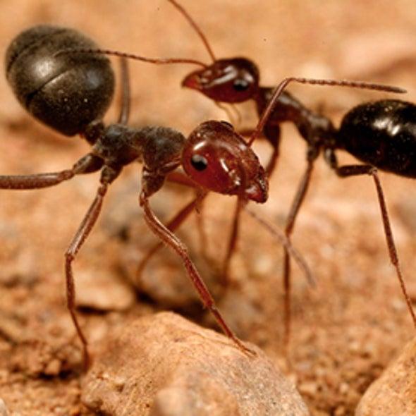 Ants at War [Slide Show]