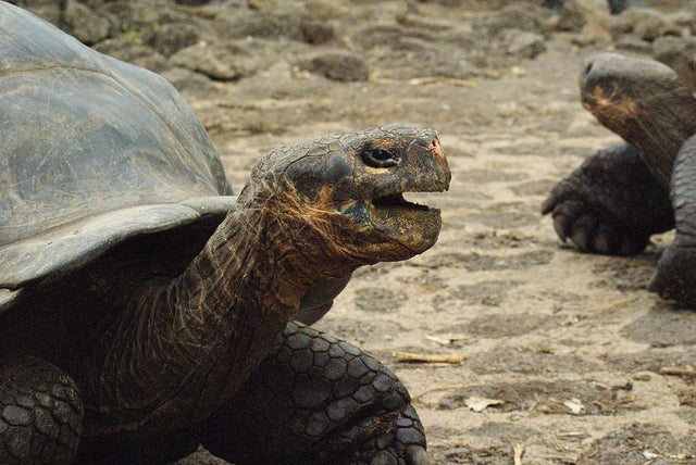 Darwin Research Station in Trouble in Galapagos