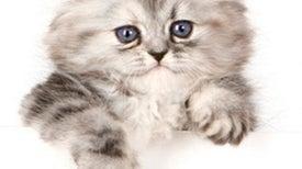 How to Decode Cat Behaviors