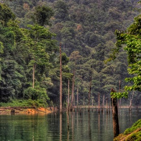 Can Carbon Trading Save Asia's Remaining Forests?