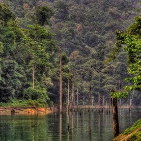 rainforest tasik kenyir