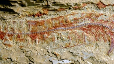 Oldest Nervous System Found in 520-Million-Year-Old Fossil