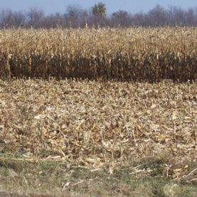 cellulosic biofuel enzymes corn stover