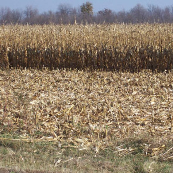Newly Uncovered Enzymes Turn Corn Plant Waste into Biofuel