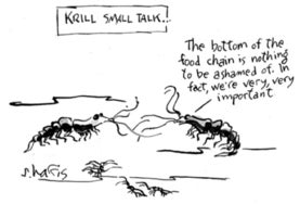 Krill small talk