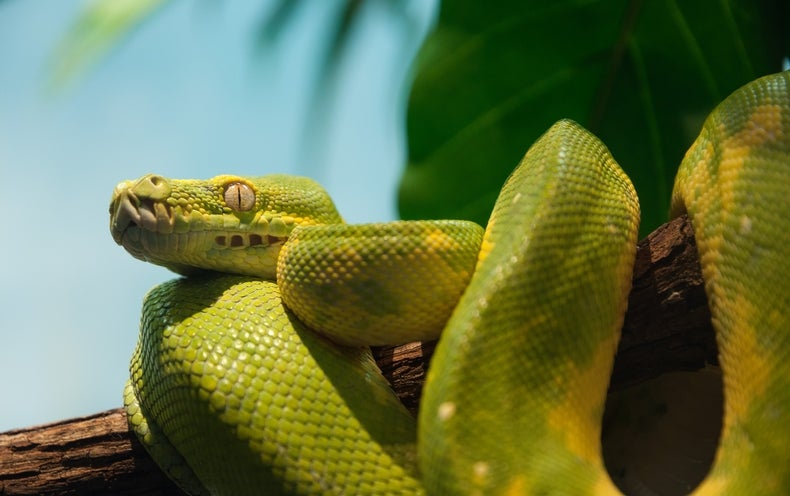 CRISPR-Edited Mouse Genes Helps Us Understand How Snakes Lost Their Legs