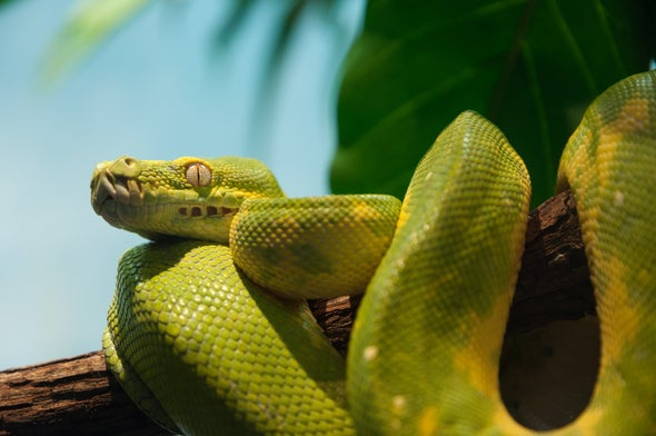 CRISPR-Edited Mouse Genes Help Us Understand How Snakes Lost Their Legs