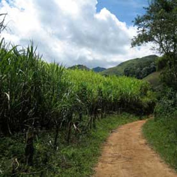 Increased Sugar Cane Production in Brazil May Affect Regional Climate