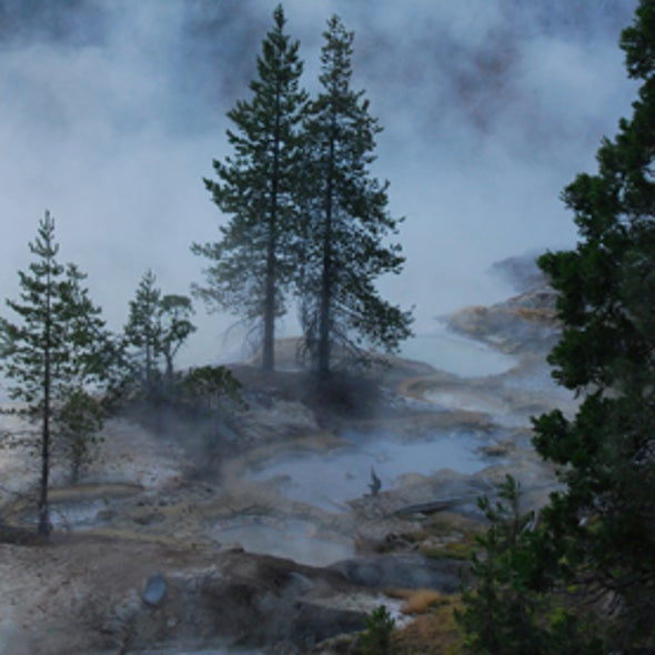 Hot Spring Yields New Hybrid Viral Genome