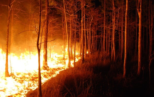 Government Scientist Blocked from Talking About Climate and Wildfires