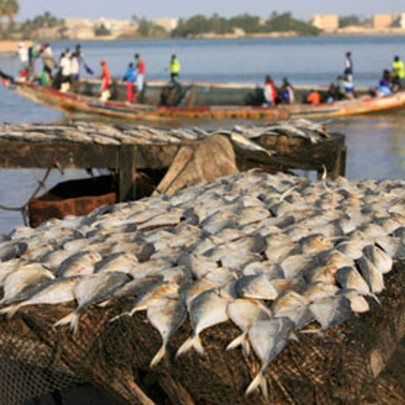 China Estimated to Dramatically Underreport Its Overseas Fishing Catch