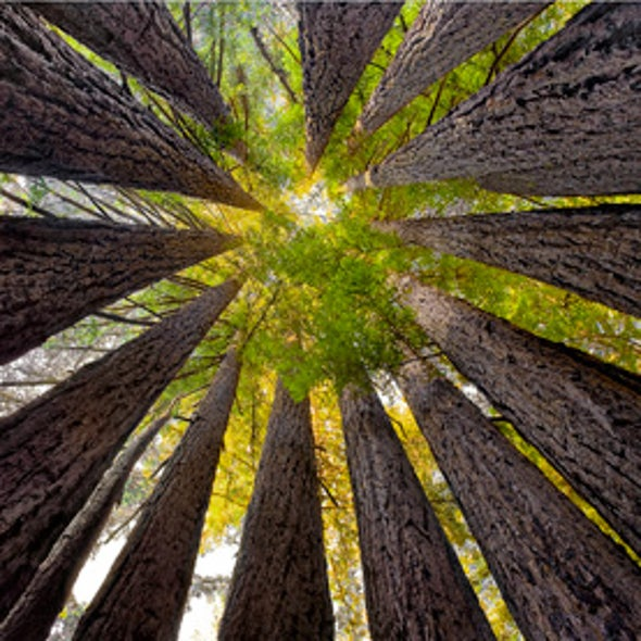 Prize-Winning Photos Capture New Views of the Deep Redwood Forest [Slide Show]