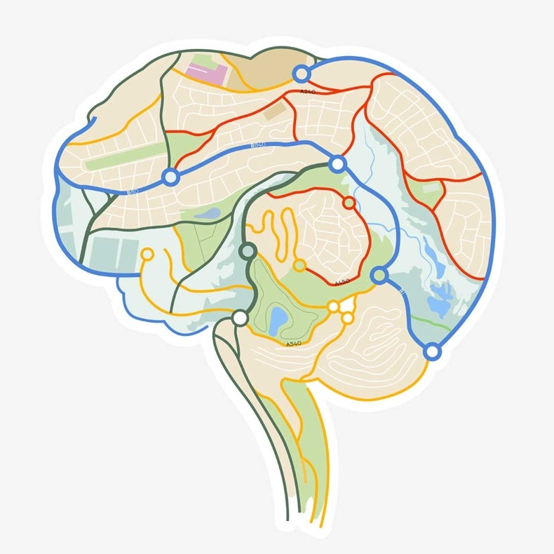How the Brain Finds Its Way [Video]