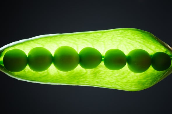 Can Plants Hear? - Scientific American