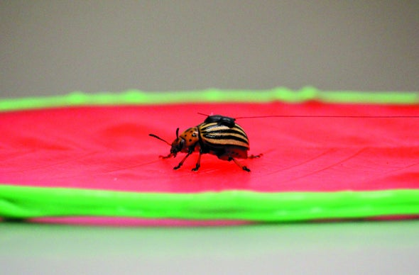 Microscopic Wrinkles in Leaves Ward Off Insects