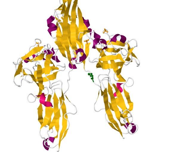 """""""Genetic Heroes"""" May Be Key to Treating Debilitating Diseases"""