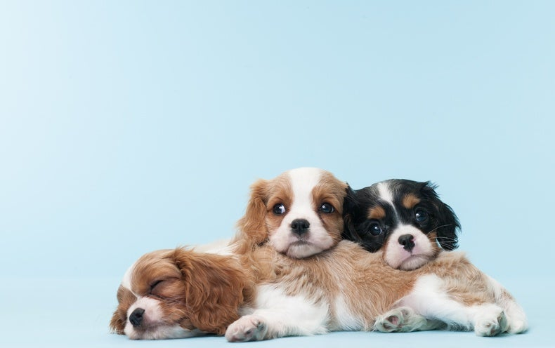 Pet Store Puppies Blamed for Drug-Resistant Infections - Scientific American