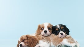 Pet Store Puppies Blamed for Drug-Resistant Infections