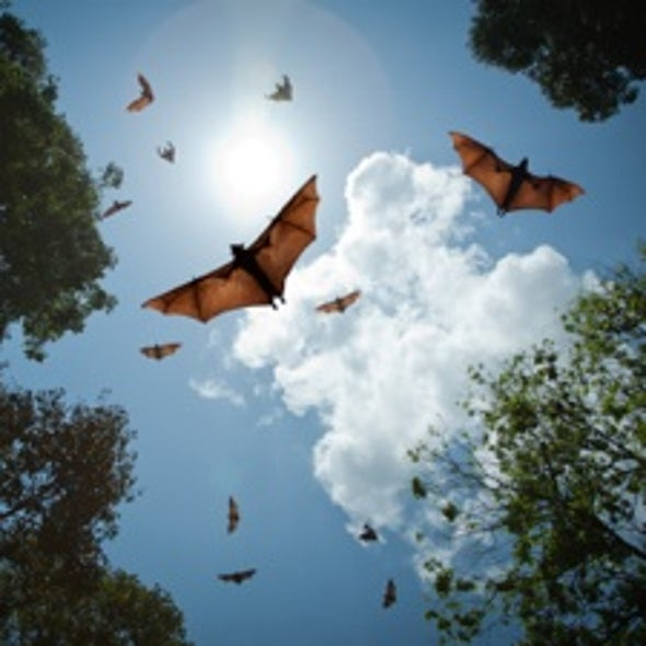 A Batty Hypothesis on the Origins of Neurodegenerative Disease Resurfaces