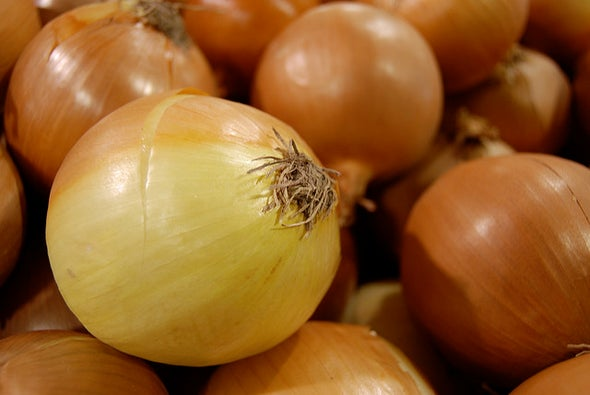 Gold-Plated Onion Shows Strength as an Artificial Muscle