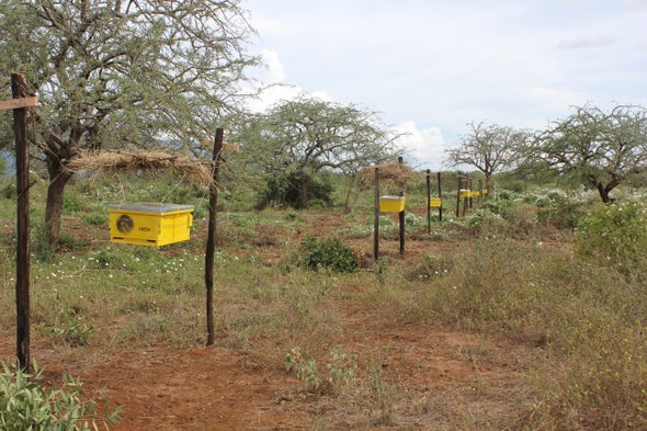 Living 'Bee Fences' Protect Farmers from Elephants, and Vice Versa