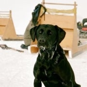 Dogged Research: The Top 10 Canines of Science [Slide Show]