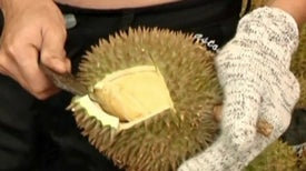 Scientists Smell Success with Durian Wine