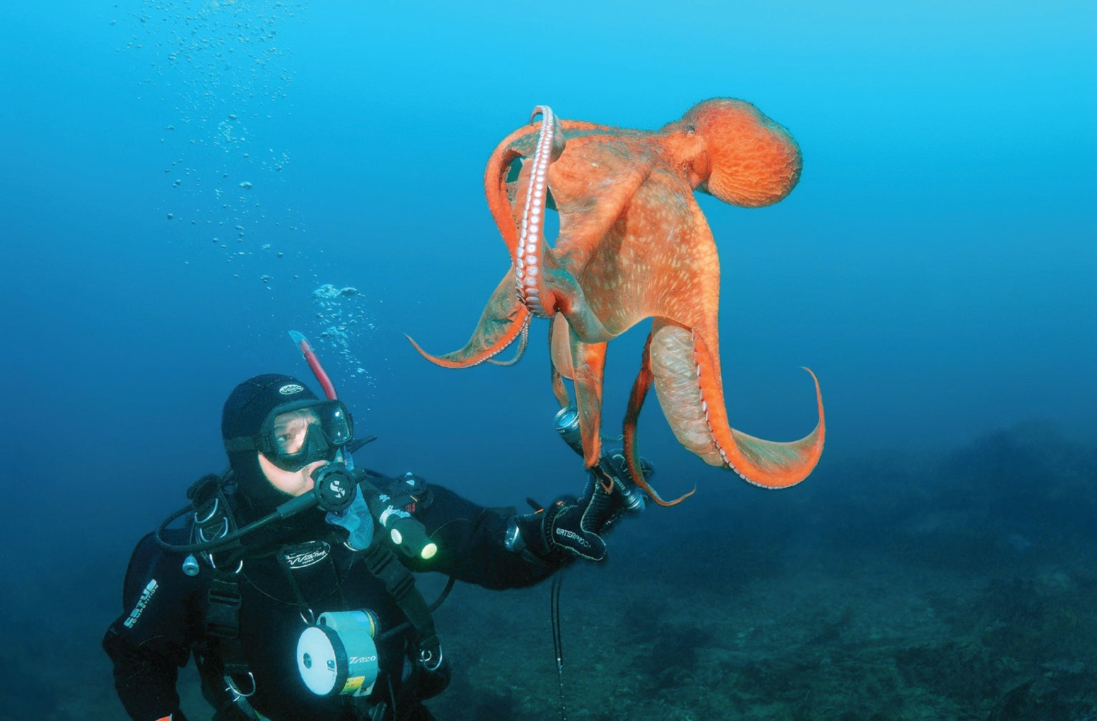 the mind of an octopus scientific american