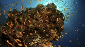 Ocean's Oxygen Starts Running Low