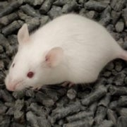 University Animal Research Practices Slammed in Report