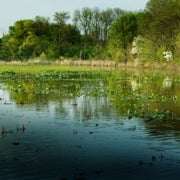 Wetlands Update--Has Preservation Had an Impact?