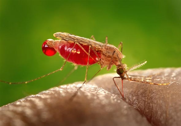 Networks Untangle Malaria's Deadly Shuffle