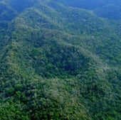 PRISTINE FOREST CANOPY