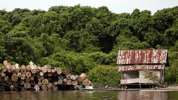 Better Logging Could Slow Global Warming