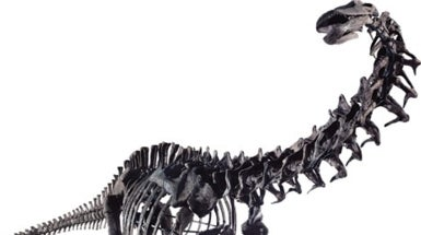 Forget <i>T. Rex</i>: Long-Necked Dinosaurs Ruled the Planet
