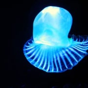 Bioluminescence.