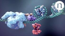Using CRISPR to Do More Than Cut