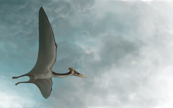 """Meet """"Dracula,"""" the Largest Pterosaur Found to Date"""